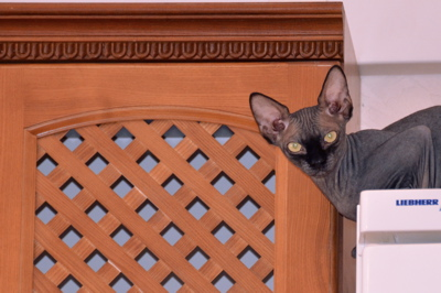 s cat 3