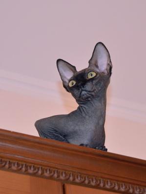 s cat