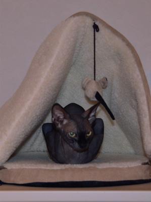 s cat 5