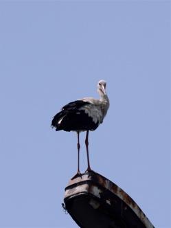 stork 4
