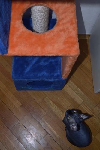 cat tower 2
