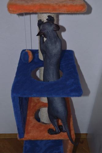 cat tower 3