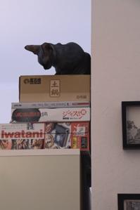 s cat 6