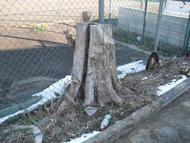 足立区 伐採
