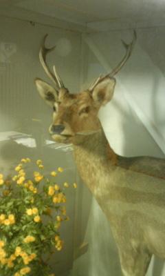 温泉宿の鹿120817_1442~01