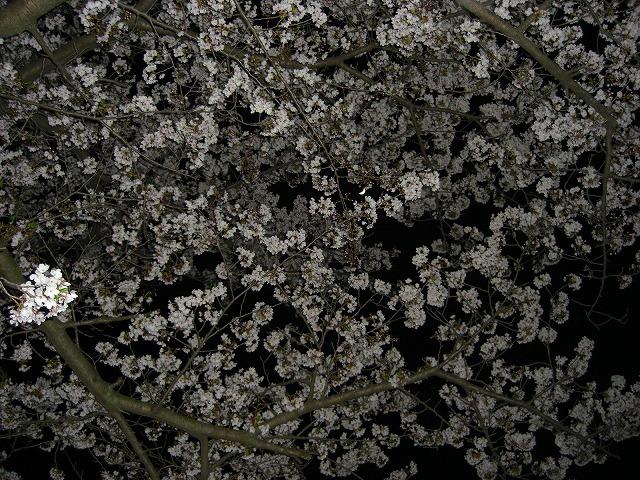 harudayonn20110409PICT0010.jpg