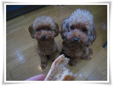 パン欲しい♪