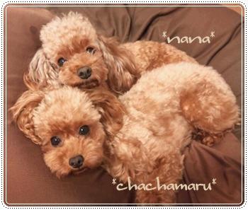 nana・chacha