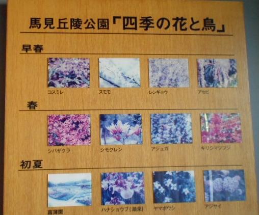 四季の花と鳥①