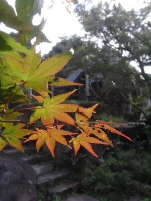 紅葉201101