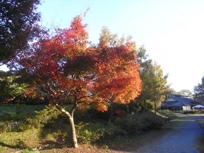 紅葉201104