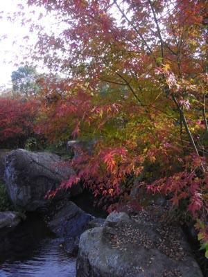 紅葉201106