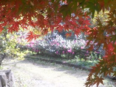 紅葉201111