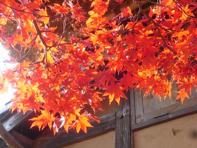 紅葉201112