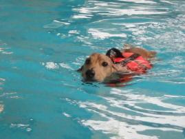 泳ぎます1