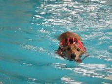 泳ぎます2