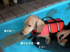 泳ぐの・・