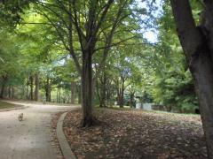 公園2-11