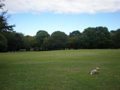 公園3-7