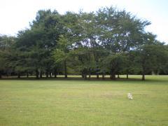 公園3-6
