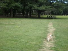 公園3-3