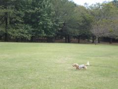 公園3-10