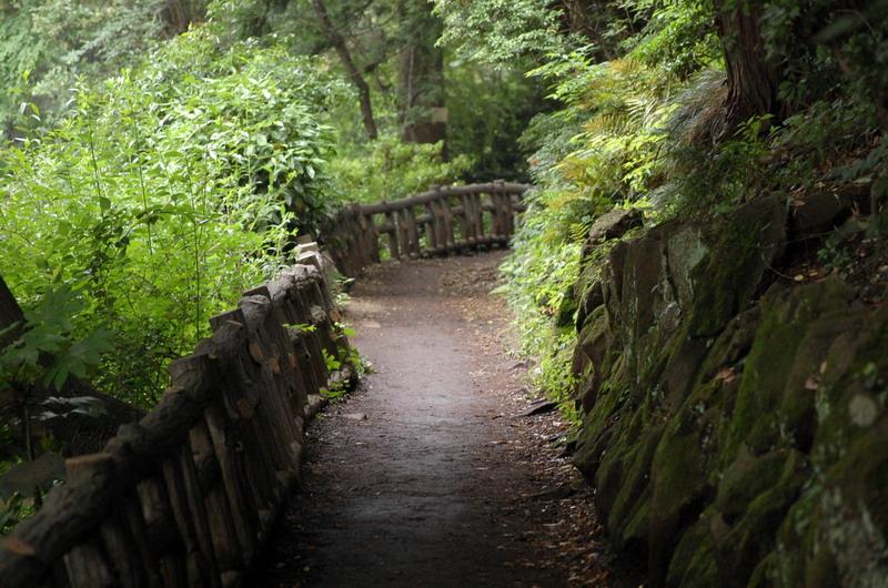 池の畔の遊歩道