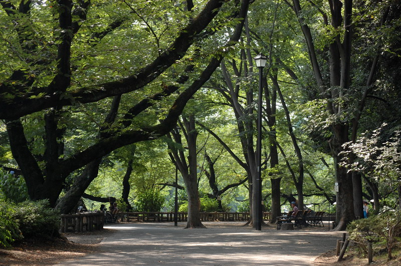 夏の井の頭公園