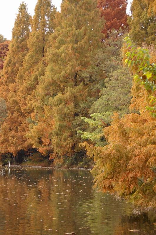 三宝寺池9