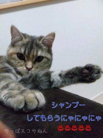 モカちゃん2