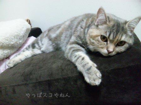 モカちゃん3