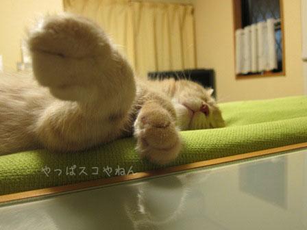爆睡してるゼ