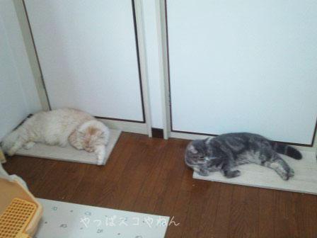 ひんやりベッドで眠るラスちゃん&五郎さん