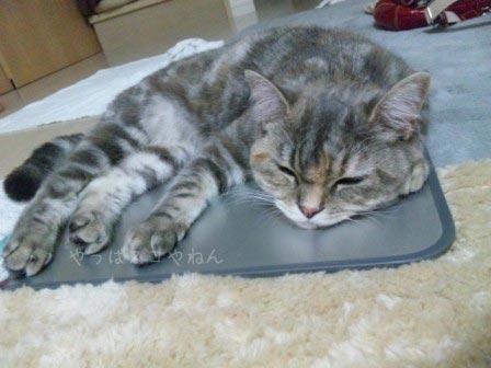 ひんやりベッドで眠るモカちゃん