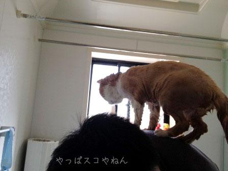 濡れるのイヤッ!!!