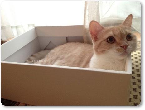 箱好き柚子ちゃん