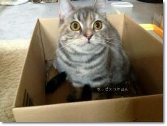 箱も好き♪