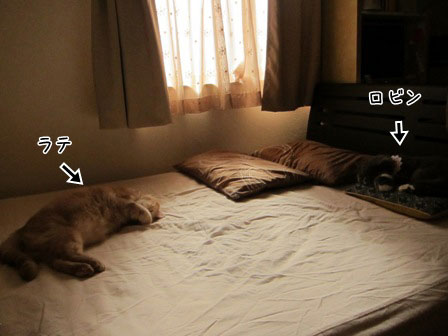 猫ベッド状態