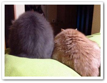 微妙な距離のラテ&ロビン