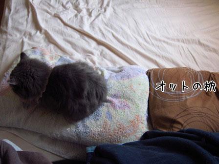 こっちがアタシのベッドやし