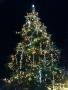 クリスマスツリー イルミネーション ラクーア