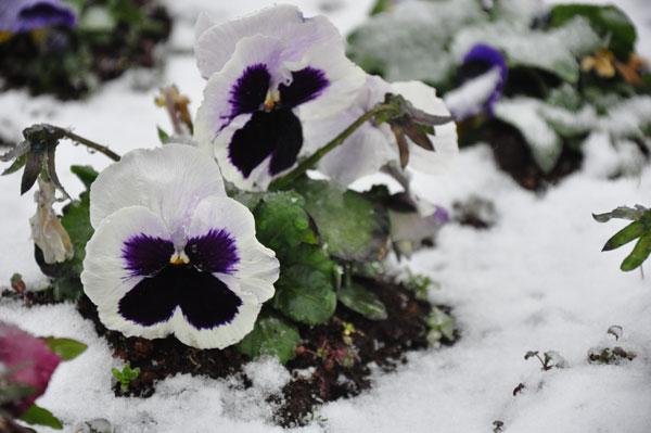 flower07.jpg