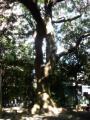 清野井庭神社18
