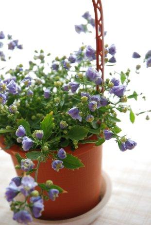 flower14-10.jpg