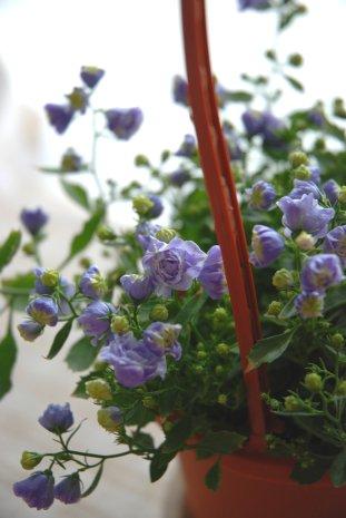 flower14-11.jpg