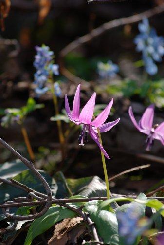 flower14-16.jpg