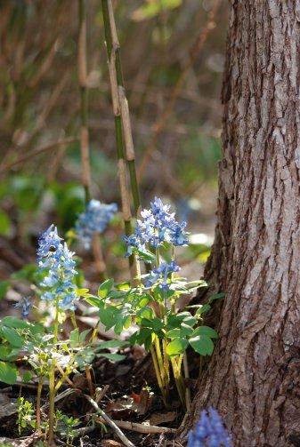 flower14-19.jpg