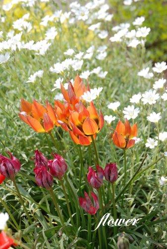 flower14-20.jpg