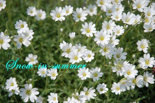 flower14-21.jpg