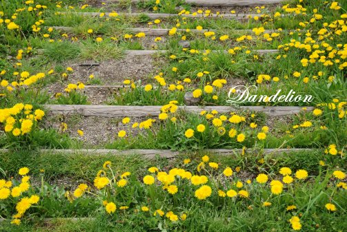flower14-22.jpg